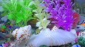tanks : Fishes in Colorful Aquarium in Underwater Stock Footage