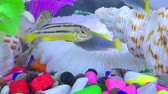 tatlısu : Fishes in Colorful Aquarium in Underwater Stok Video