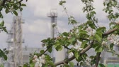 combustível : wind shakes green leaves on blooming apple tree branches and production towers in background
