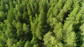 forêt boréale : bird eye flight boundless taiga with lush spruces in summer Vidéos Libres De Droits