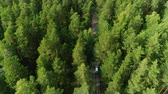 boreal : flight above pine tree tops along asphalt road with driving white cars