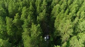 boreal : flycam follows road hidden in shade of fir trees with driving autos
