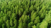 boreal : impressive aerial boundless expanses of forest and blue sky on horizon