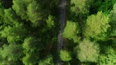 boreal : bright forest tree tops lit by sunlight and dark shades with lone car Stock Footage