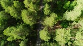 boreal : bird eye flight above tree tops showing road hidden in forest darkness Stock Footage