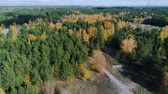 береза : aerial view gold birches and green tree forest with track