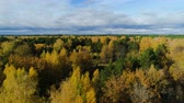 хвойный : bird eye view yellow birch and evergreen forest under sky
