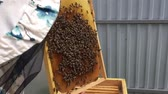 melado : ound hexagon texture, wax honeycomb from bee hive filled with golden honey. Stock Footage