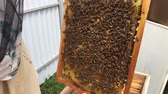 медовый : ound hexagon texture, wax honeycomb from bee hive filled with golden honey. Стоковые видеозаписи