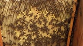 wosk : Background hexagon texture, waxed honeycomb from bee hive filled with golden honey.