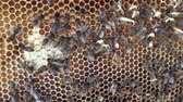 медовый : Abstract hexagon structure is honeycomb from bee hive filled with golden honey. Honeycomb summer photography of gooey honey from bee village. Honey rural of bees honeycombs to countryside.