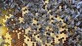 медовый : Abstract hexagon structure is honeycomb from bee hive filled with golden honey.