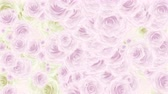 Beautiful very soft seamless loop 3D animation like intro for wedding, valentines day or memories video. On this footage many pink and white rose buds falling down, seamless loop background