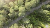 Aerial view of the white car, which is slowly moving on the road through the forest, flight over the forest and surveillance the movement of the car.