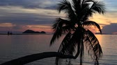 golden : Coconut palm tree silhouette and water sea at sunset. Koh Phangan island, Thailand Stock Footage