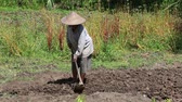 starość : BALI, INDONESIA - FEBRUARY 22, 2015 : Unknown old woman farmer holding spade at field. Daily activities of female farmer in order to feed themselves and their families