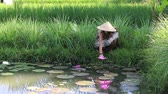 indonesia : Portrait of a girl in a straw hat near the lake with lilies and paddy field in Bali, Indonesia Stock Footage