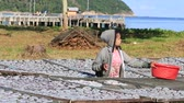 calamary : KOH PHANGAN, THAILAND - NOVEMBER 16, 2015: Unknown Thai woman lays squid drying in the fishing village. Fishing is main occupation and income source on the island