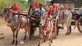 cartn corrugado : BAGAN, MYANMAR - JANUARY 21, 2016: Decorated buffalo and local people who participated in the donation channeled ceremony Shinbyu, marking the samanera ordination of a boy under the age of 20
