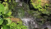 establishing shot : Close up of artificial waterfall in tropical city garden. Bangkok, Thailand Stock Footage
