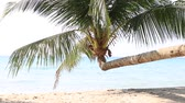 season : Tropical sand beach with exotic coconut palm trees near sea water, Thailand