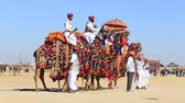 senhor : JAISALMER, INDIA - FEBRUARY 09, 2017: Camels and indian men wearing traditional Rajasthani dress. Desert contest as part of the Desert Festival in Jaisalmer, Rajasthan, India Vídeos