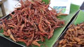 teremtmény : Street trade food: edible roasted and spiced meal. Bugs fried on the night food market in island Koh Phangan, Thailand. Close up Stock mozgókép