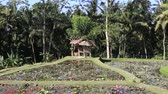 lilia : Pond with lotus flowers in the recreation area near Ubud, island Bali, Indonesia Wideo
