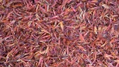 szafran : Saffron threads close up, top view. Macro dried flowers saffron threads Wideo