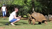 tartaruga : LA VANILLE NATURE PARK, MAURITIUS - MARCH 08, 2017: Unknown man feeds a giant turtle in La Vanille Nature Park, island Mauritius