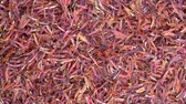 szafran : Saffron threads close up rotation loopable 4k top view. Food background. Gastronomy concept, organic food. Macro dried flowers and leaves saffron