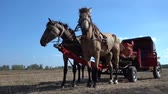 vagón : Vintage chariot with two horses on field during Ethno-eco festival Koledar in city Slavuta, Ukraine