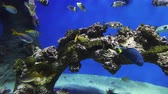 tank : tropical fish swim in the ocean or sea Stock Footage