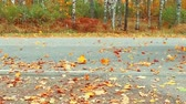 fallen autumn leaves scatter after driving on the highway. 120 fps video Stok Video