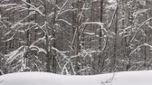 január : heavy snowfall is on the background of the winter forest