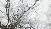 birch tree branches in snow camera rotation Vídeos