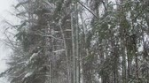 heavy snowfall is on the background of the winter forest. shot at 120 frames per second