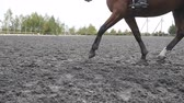 paw : Following to foot of horse running on the sand. Close up of legs of stallion galloping on the wet muddy ground. Slow motion
