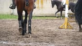 equestrian sport : Many horses running in manege. Slow motion