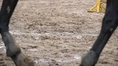 equestrian sport : Feet of horse running on mud. Slow mo