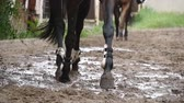 equestrian sport : Feet of horses are running on mud. Slow motion Stock Footage