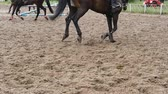 plnokrevník : Foot of horse running on mud. Close up of legs galloping on the wet muddy ground. Slow motion
