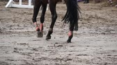 plnokrevník : Foot of horse walking on mud. Close up of legs walking kicking up the wet muddy ground. Slow motion