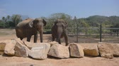 addo : Two elephants standing at the zoo. Slow motion Close up Stock Footage