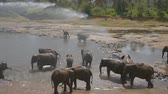 addo : Herd of elephants bathe in river or lake. Slow motion