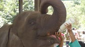 católico : Female indian hands is feeding milk of a small elephant in zoo. Slow motion Close up