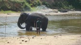 addo : A large african elephant bathes in river or lake. Close up Stock Footage