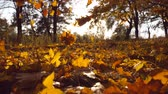 parques : Yellow leaves falling in autumn park and sun shining through it. Beautiful landscape background. Colorful fall season. Slow motion Close up