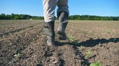 step by step : Follow to male farmers feet in boots walking through the small green sprouts of sunflower on the field. Legs of young man stepping on the dry soil at the meadow. Low angle view Close up Slow motion Stock Footage