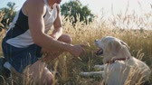 hound : Young man sits on grass at meadow and strokes his labrador. Guy spends time together with his pet in nature. Friendship with domestic animal. Side view Slow motion Close up